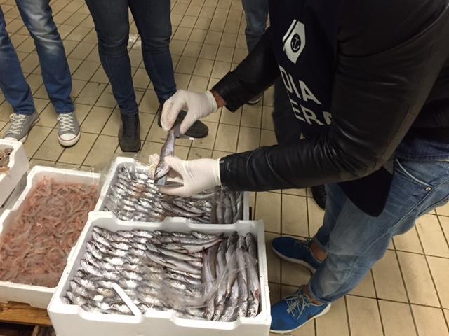 Pesca di frodo e mercato ittico: controlli a tappeto della Capitaneria
