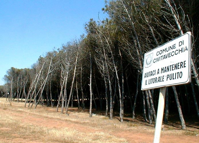 Frasca, in progetto la recinzione per ridare decoro alla pineta