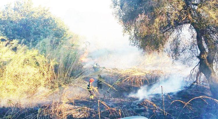 Rogo di castelfusano, fiamme e polemiche