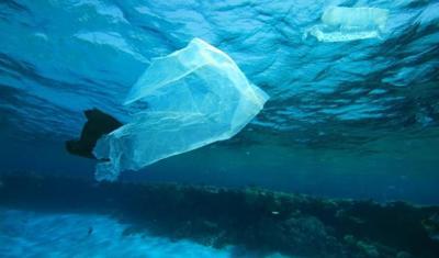 Batteri ''spazzini'' contro l'inquinamento della plastica