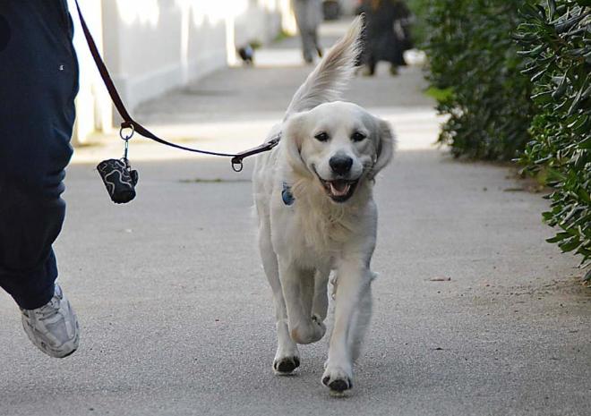 Cani in strada, Sacripanti: ''Serve il rispetto delle regole''
