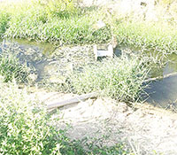 Frana il canale sotto l'argine