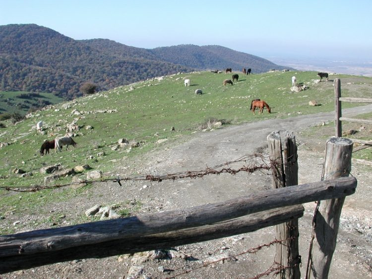 Agraria Tolfa, parte il progetto ''C.E.R.E.R.E.''