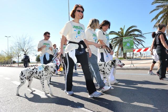 """Civitavecchia, """"maratona a sei zampe"""" per le strade del centro"""