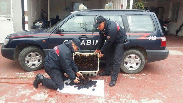 Carabinieri: sequestrati 5000 ricci