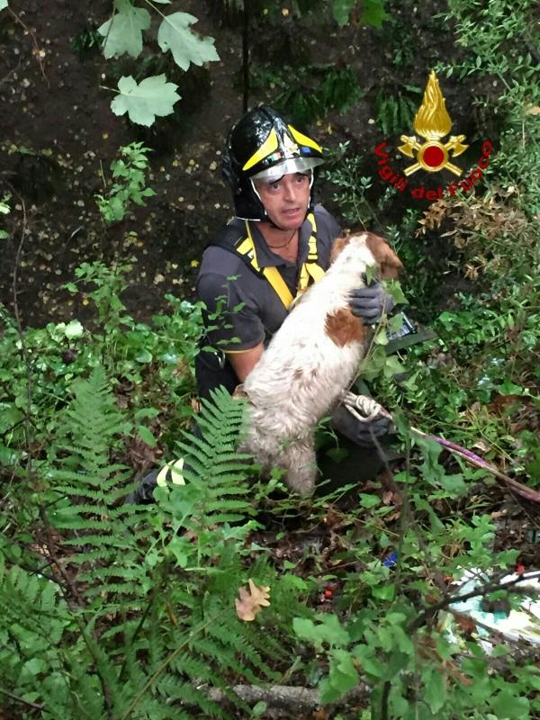 Manziana: i Vigili del fuoco salvano un cane da caccia
