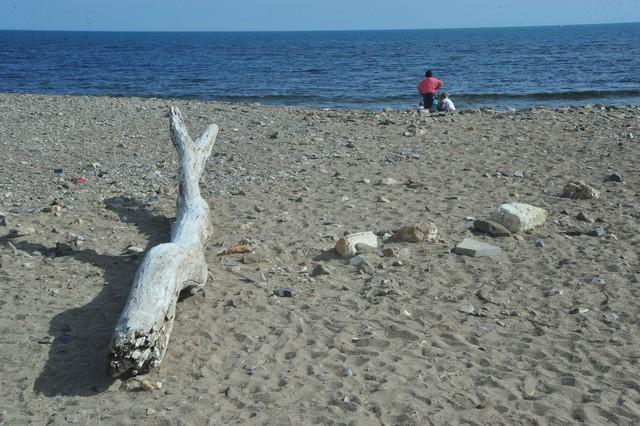 """Marietta Tidei: """"Gestione delle spiagge, situazione incresciosa"""""""