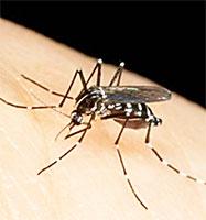 Lotta aperta alle zanzare