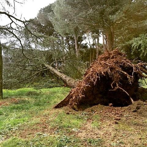 Maltempo: molti alberi caduti a Fiumicino