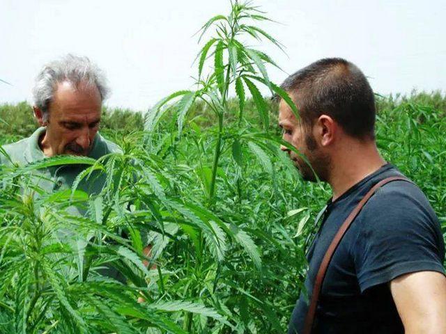 Sì alla cannabis per uso terapeutico