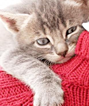 Colonie feline, in Comune i cartelli di segnalazione