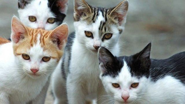 Gatti, via alla sterilizzazione