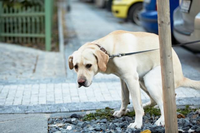 Parte il nuovo servizio sperimentale dedicato alla raccolta delle deiezioni canine