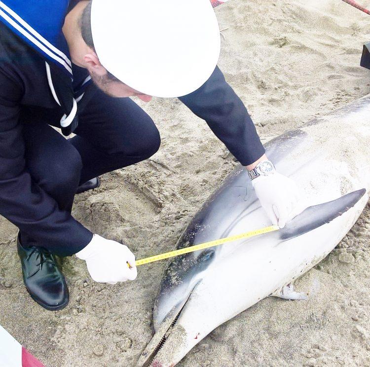 Delfino spiaggiato a Fregene