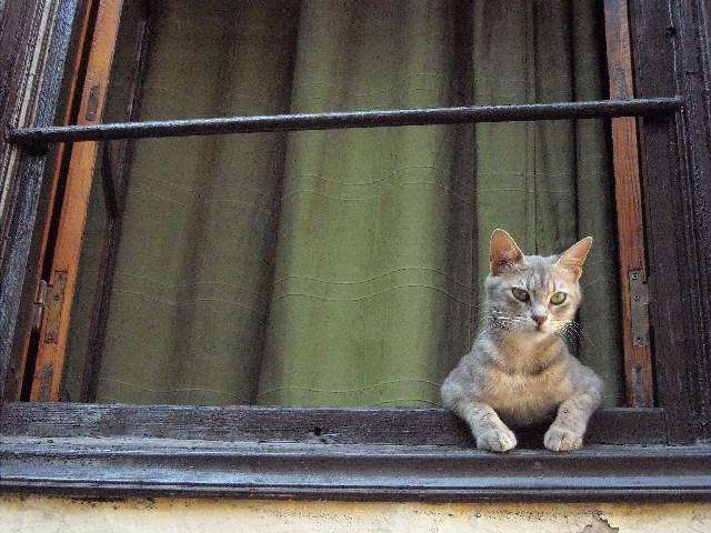 Santa Marinella, anche un regolamento comunale per la tutela degli animali