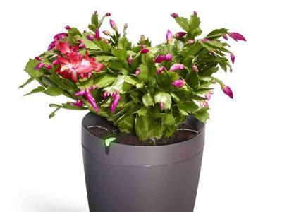 Ecco il vaso hi-tech e il ''giardino connesso''