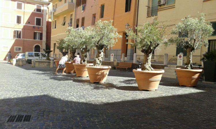Ulivi a piazza Leandra: Mecozzi si interroga sulla paesaggistica