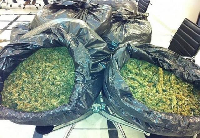 Arresto per spaccio: sequestrati 50 chili di marijuana