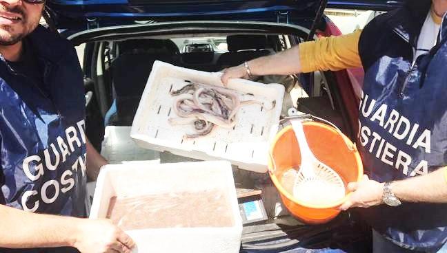 Vendeva pesce on line senza autorizzazioni