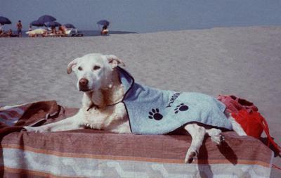 Cani in spiaggia? Fanno bene ai bimbi