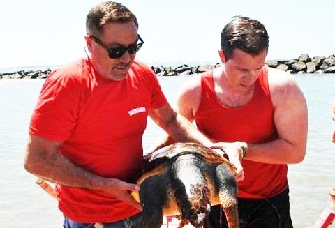 Tartaruga salvata dai bagnini