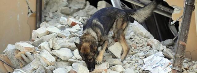 I cani di Ladispoli eroi di Amatrice