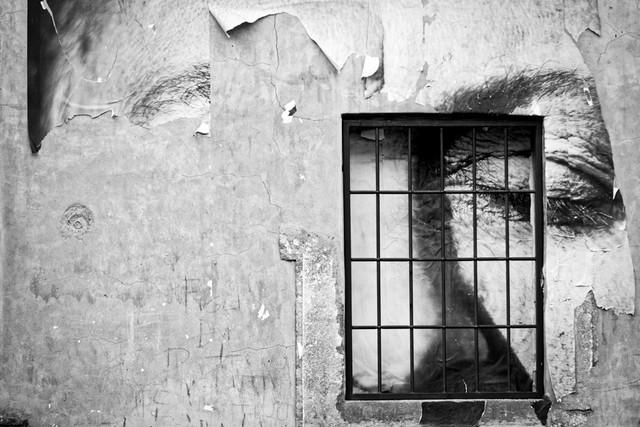 Le rughe del tempo (foto Raffaele Ballirano)
