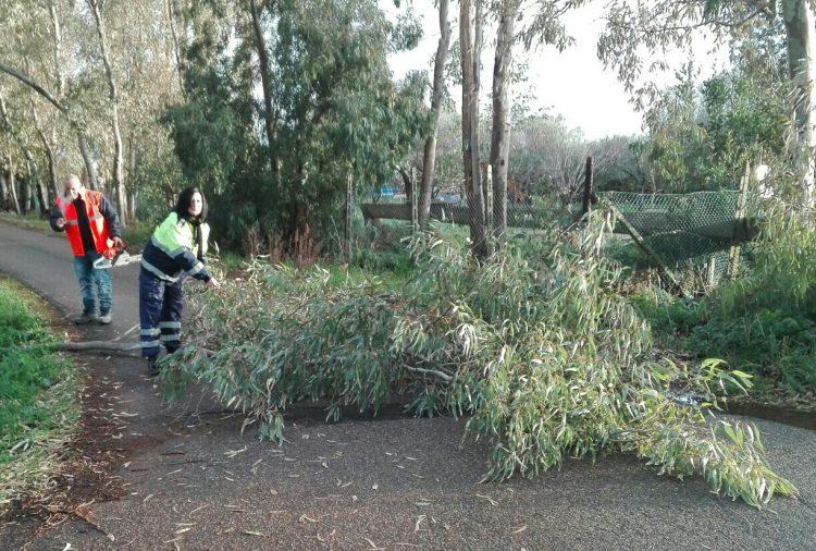 Maltempo a Tarquinia, Sacripanti (Aeopc): ''Tanti interventi per alberi caduti''