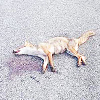 Riserva del Litorale, è strage di animali