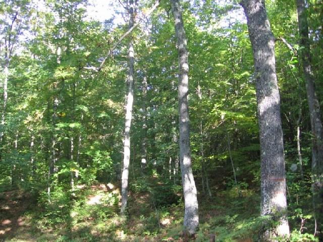 Censiti tredici alberi e specie arbicole