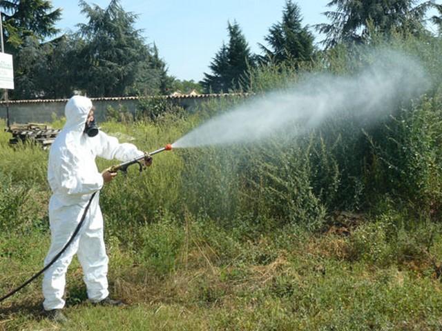 Cerveteri, al via oggi il primo ciclo di  disinfestazione contro le zanzare
