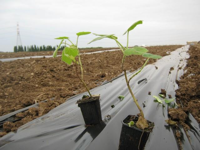 Tarquinia, orti e terreni: aumentano i costi per i concessionari