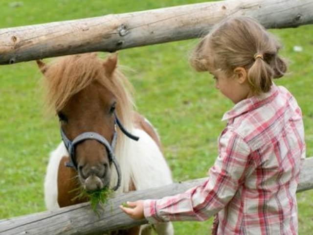 Cani e pony per la ''Festa del bambino''