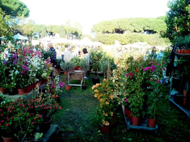 Terme in fiore (foto Damiria Delmirani)
