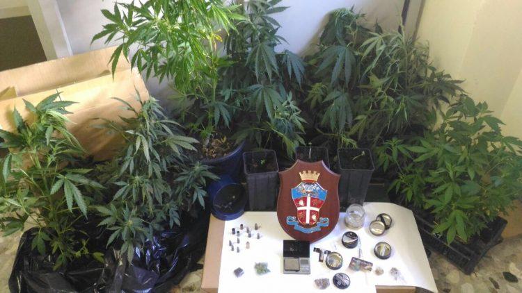 Coltivavano canapa indiana: arrestati dai Carabinieri