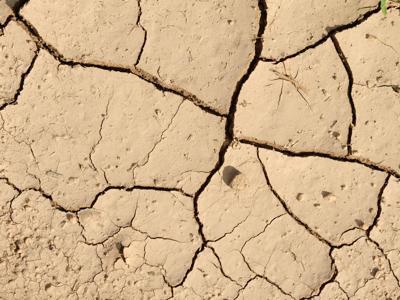 Le virtù del fico d'India nelle zone aride