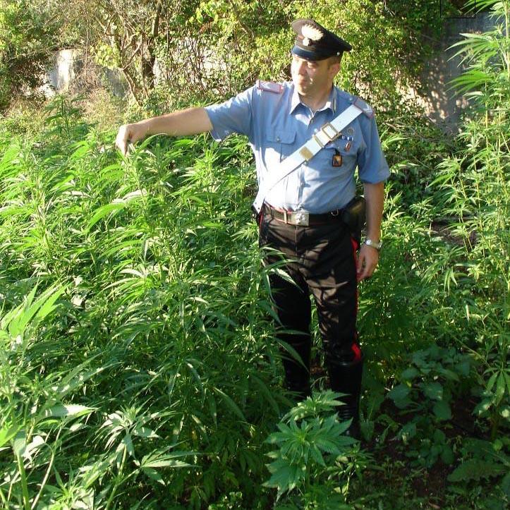 Vigilanza armata alla piantagione di marijuana: i Carabinieri arrestano due allevatori sardi