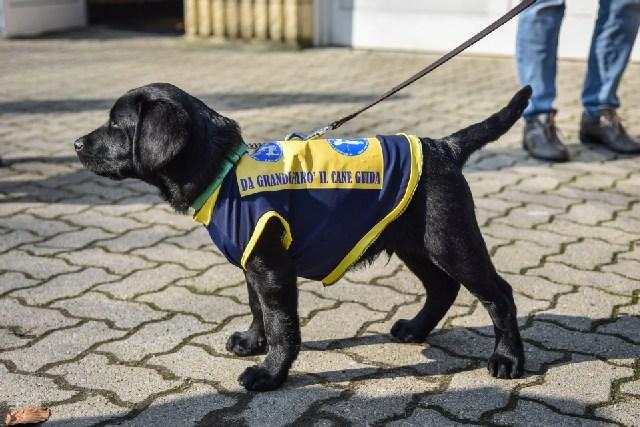 Cani guida Lions: pizzata di solidarietà con il Leo Club