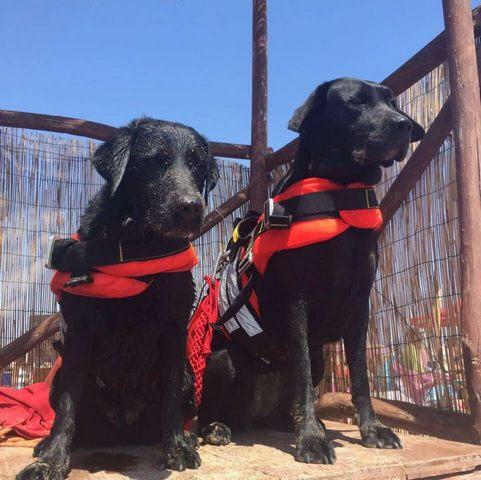 Mamma e figlia rischiano di annegare: salvate dai cani Sics Eva e India