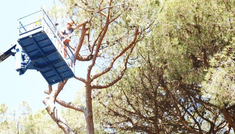 Tagliati gli alberi pericolanti