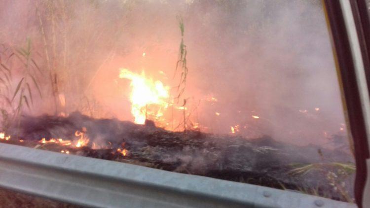 Incendio sulla provinciale Lupo Cerrino: intervento dei volontari Aeopc e della Polizia