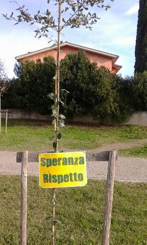 Cerveteri, nuova piantumazione dell'albero spezzato dai vandali