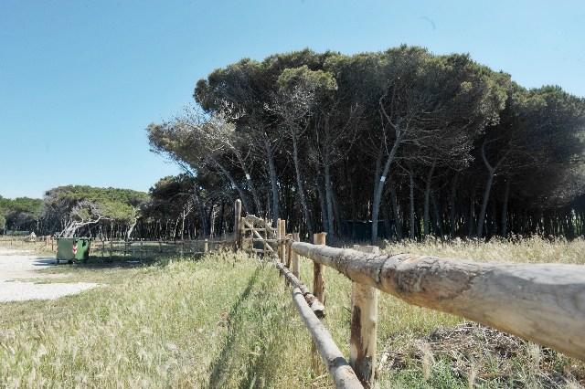 Parco archeologico alla Frasca, Almerighi accelera
