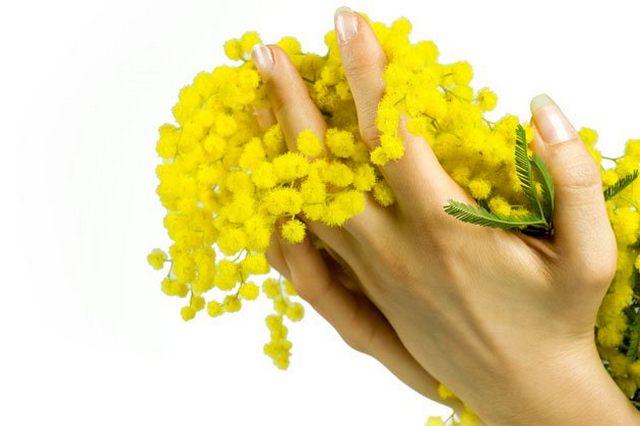 """Fare Verde: """"No alla strage delle mimose"""""""