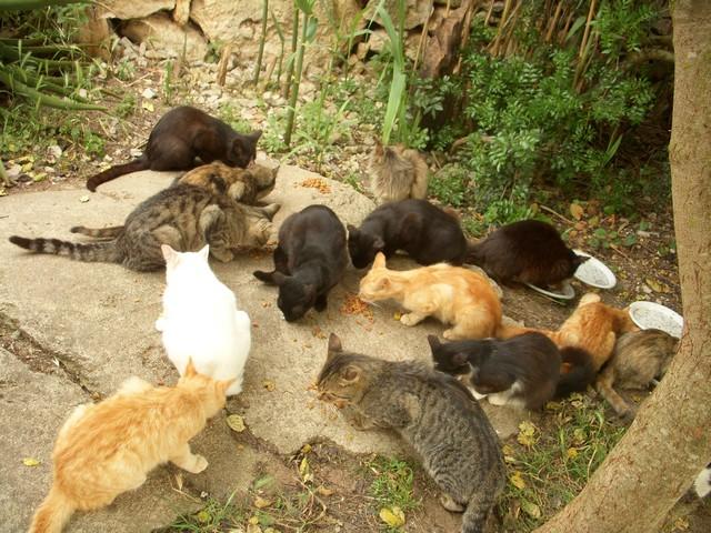 Un censimento delle colonie feline