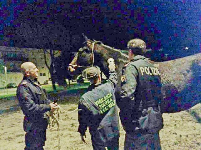 Tarquinia, recuperato cavallo smarrito
