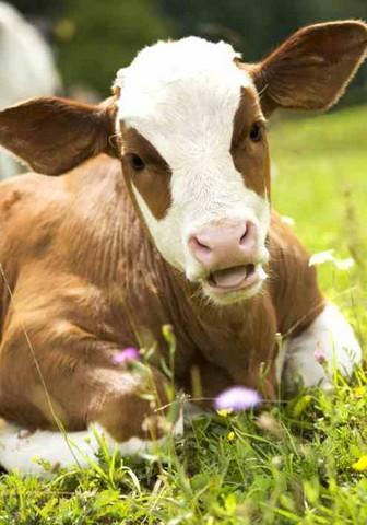 Carne biologica: accordo tra Agraria, Comune e coop