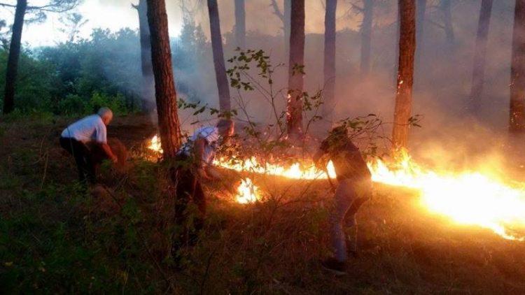 """Incendio in pineta, """"è stata solo una bravata"""""""