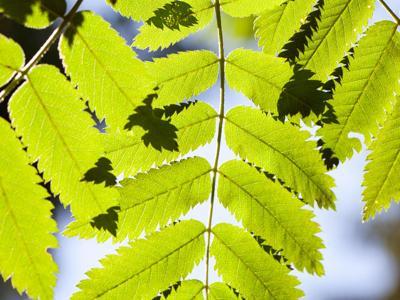 CO2, le piante si adattano e la vegetazione cresce