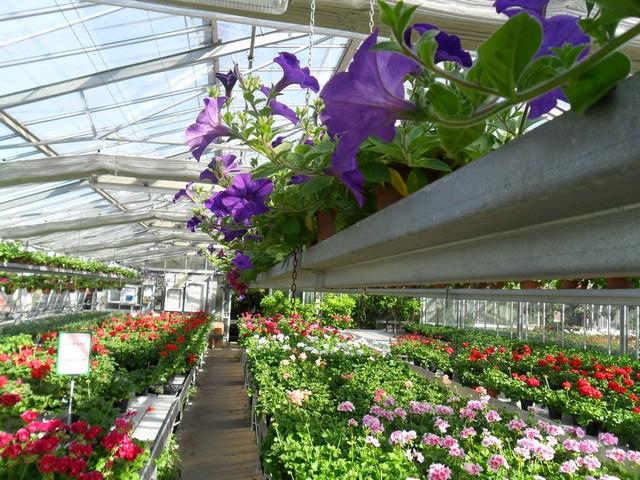 ''Giardini, assurdo tagliare fuori i floricoltori locali''